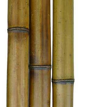 Половинка бамбука стандарт 6-7 см