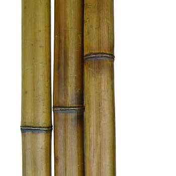 Бамбук стандарт 5-6 см
