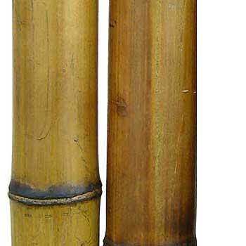 Бамбук стандарт 7-8 см