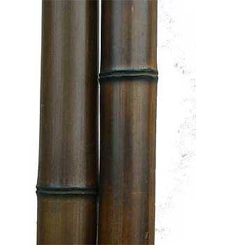Бамбук шоколад 7-8 см