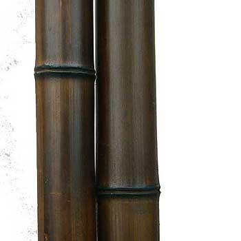 Бамбук шоколад 8-9 см