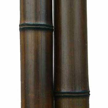 Бамбук шоколад 9-10 см