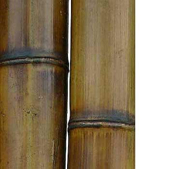 Бамбук стандарт 9-10 см