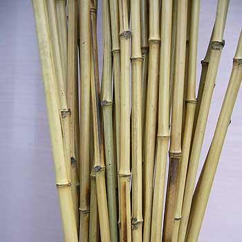 Бамбук ствол 1,5 - 2 см