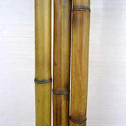 Бамбук ствол 2 - 3 см
