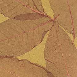 Листья S-9