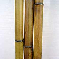 Бамбук ствол 3 - 4 см