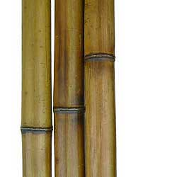 Бамбук ствол 5 - 6 см
