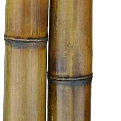 Бамбук ствол 8 - 9 см