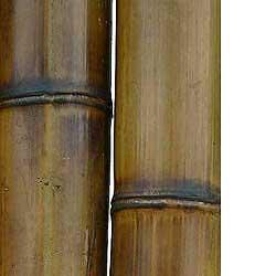 Бамбук ствол 9-10 см