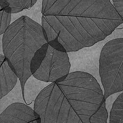 Натуральные обои  Листья Прима Ахумадо